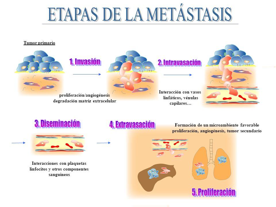 ETAPAS DE LA METÁSTASIS
