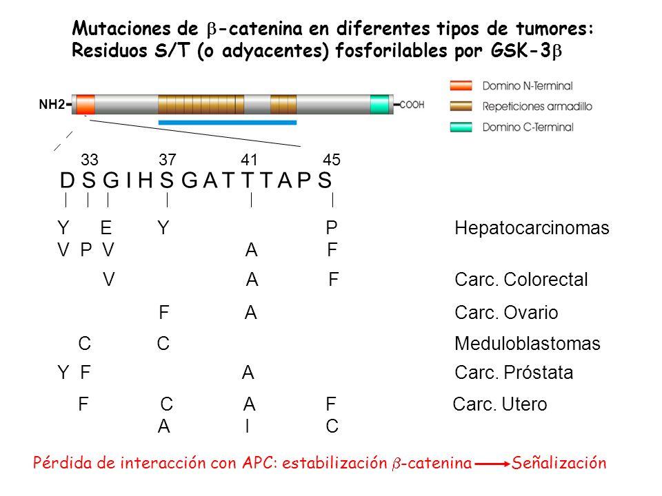 Mutaciones de b-catenina en diferentes tipos de tumores: