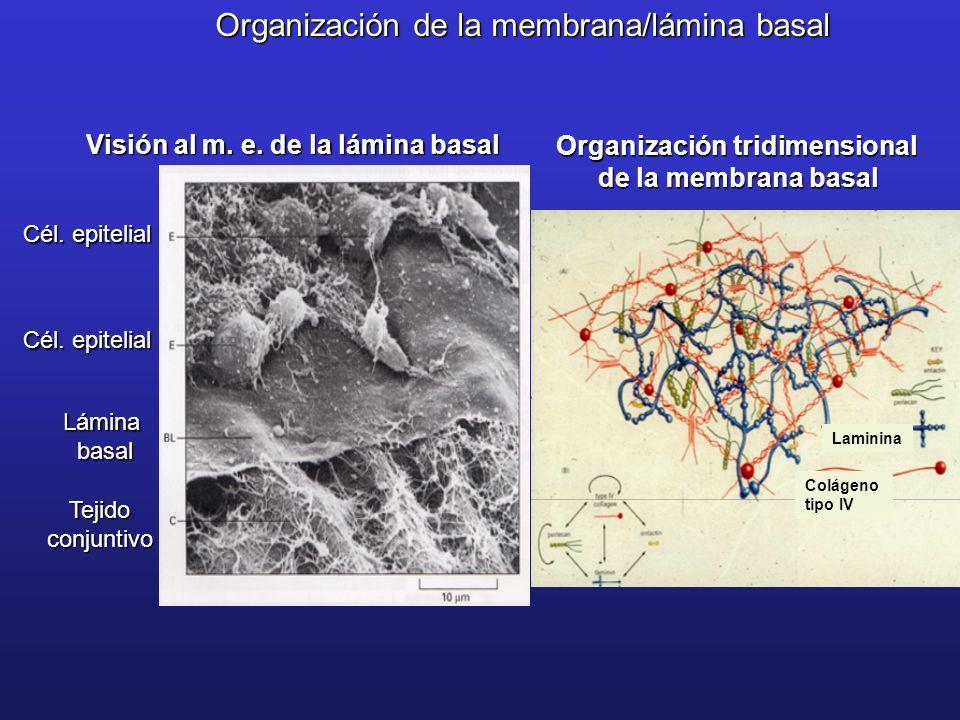 Organización tridimensional