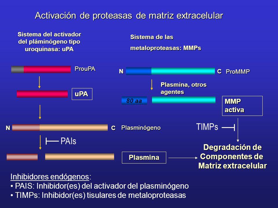 Sistema del activador del pláminógeno tipo uroquinasa: uPA