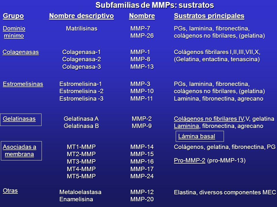 Subfamilias de MMPs: sustratos