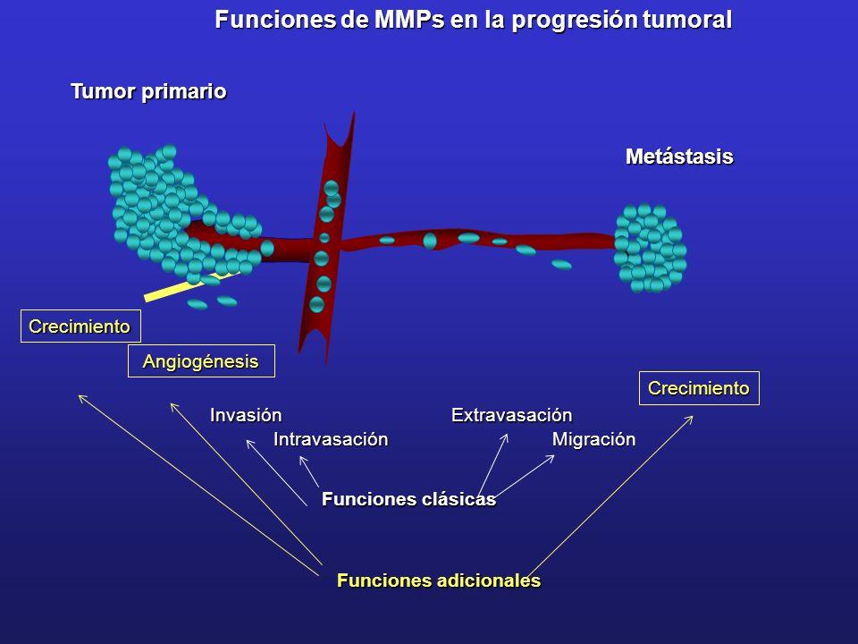 Funciones de MMPs en la progresión tumoral