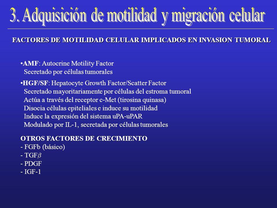 FACTORES DE MOTILIDAD CELULAR IMPLICADOS EN INVASION TUMORAL