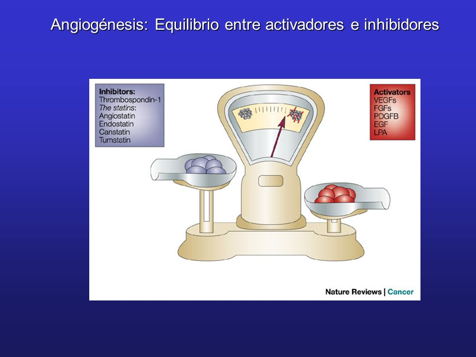 Angiogénesis: Equilibrio entre activadores e inhibidores