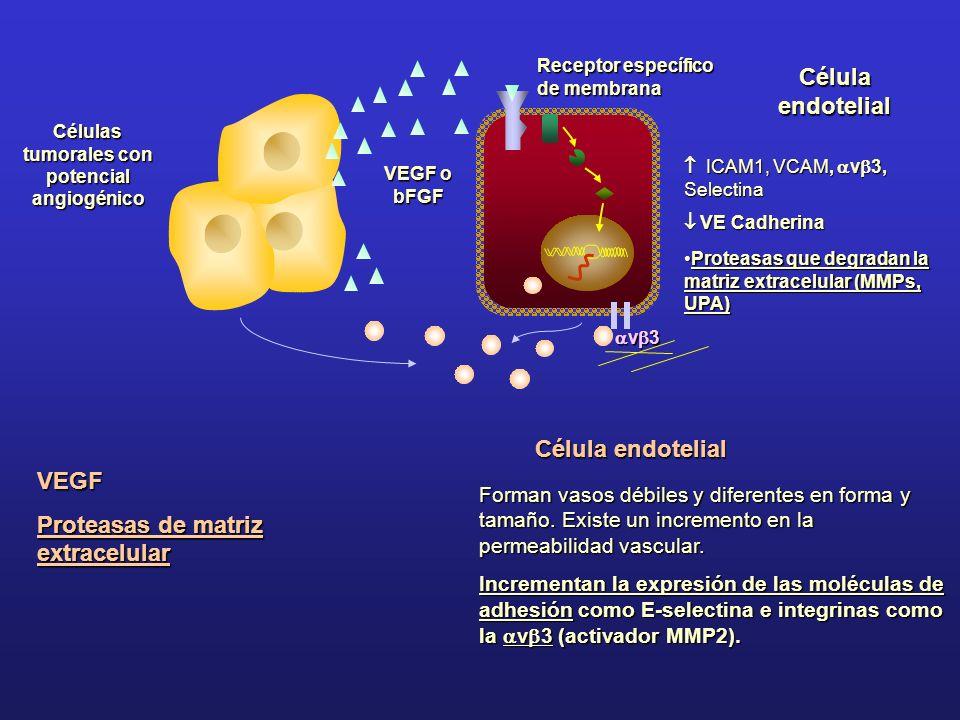 Células tumorales con potencial angiogénico