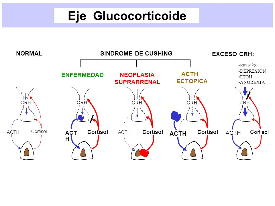 Eje Glucocorticoide NORMAL SINDROME DE CUSHING ENFERMEDAD