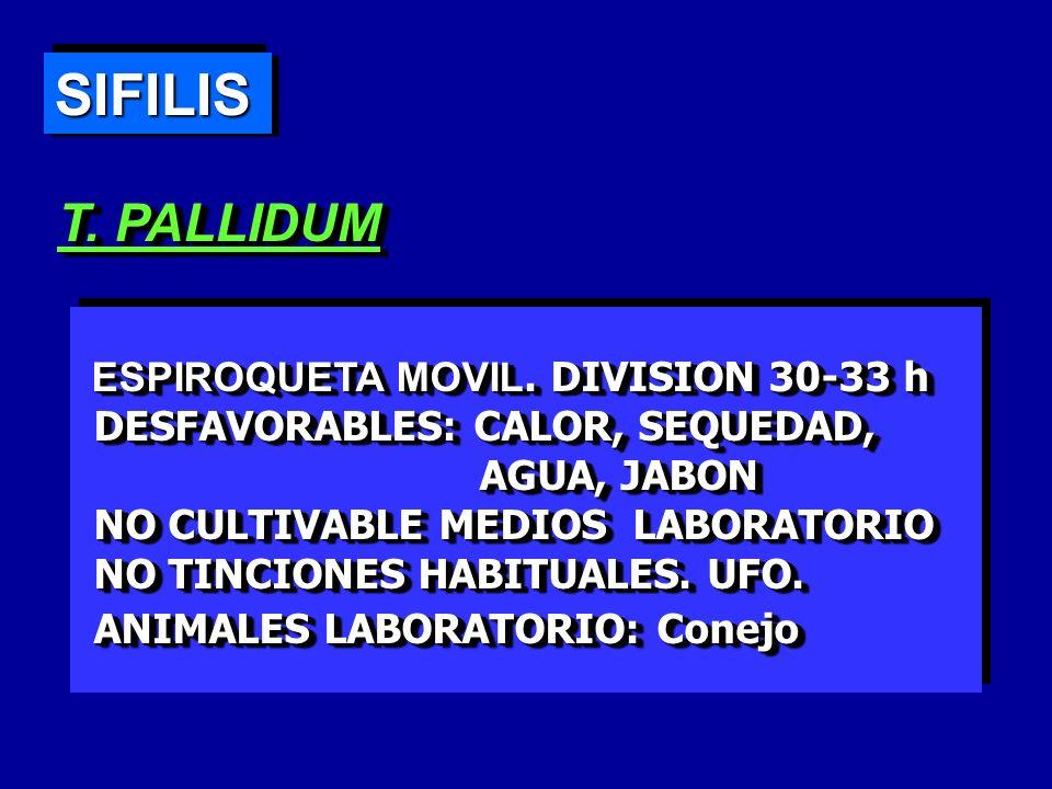 SIFILIS T. PALLIDUM ESPIROQUETA MOVIL. DIVISION 30-33 h