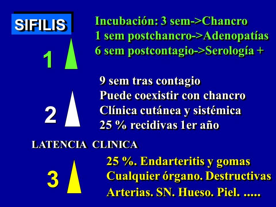 1 2 3 SIFILIS Incubación: 3 sem->Chancro