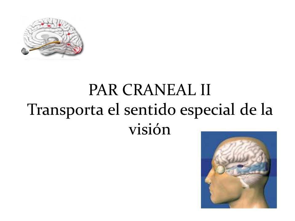 Transporta el sentido especial de la visión