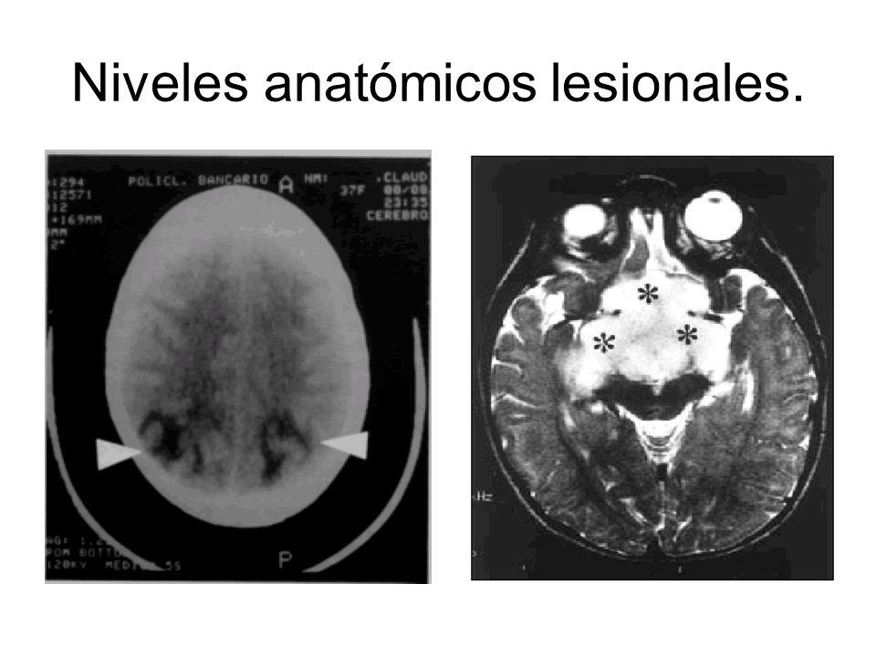 Niveles anatómicos lesionales.