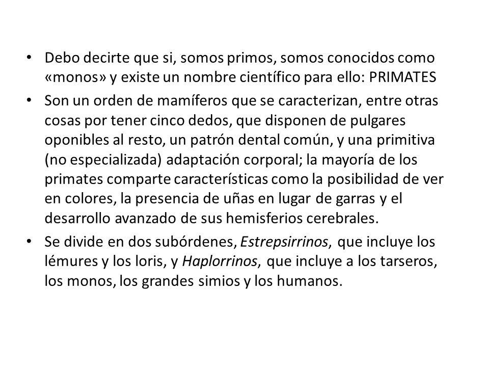 Debo decirte que si, somos primos, somos conocidos como «monos» y existe un nombre científico para ello: PRIMATES