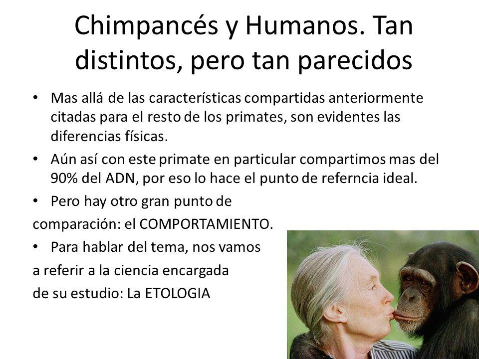 Chimpancés y Humanos. Tan distintos, pero tan parecidos