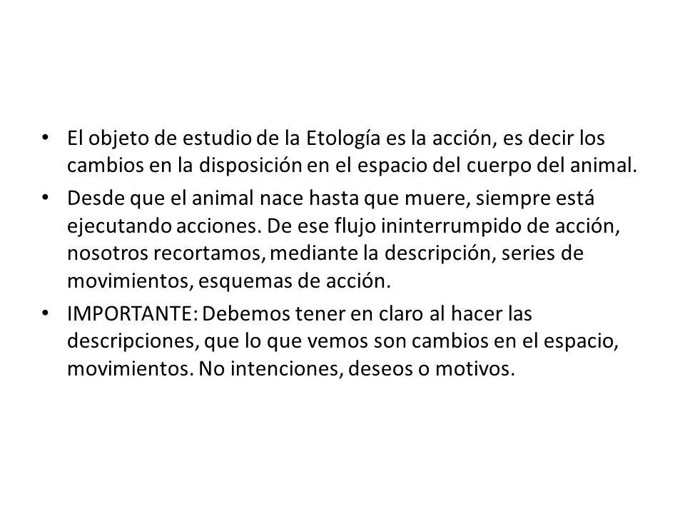 El objeto de estudio de la Etología es la acción, es decir los cambios en la disposición en el espacio del cuerpo del animal.