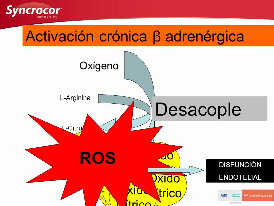 NO-Sintetasa Desacople ROS Activación aguda β adrenérgica