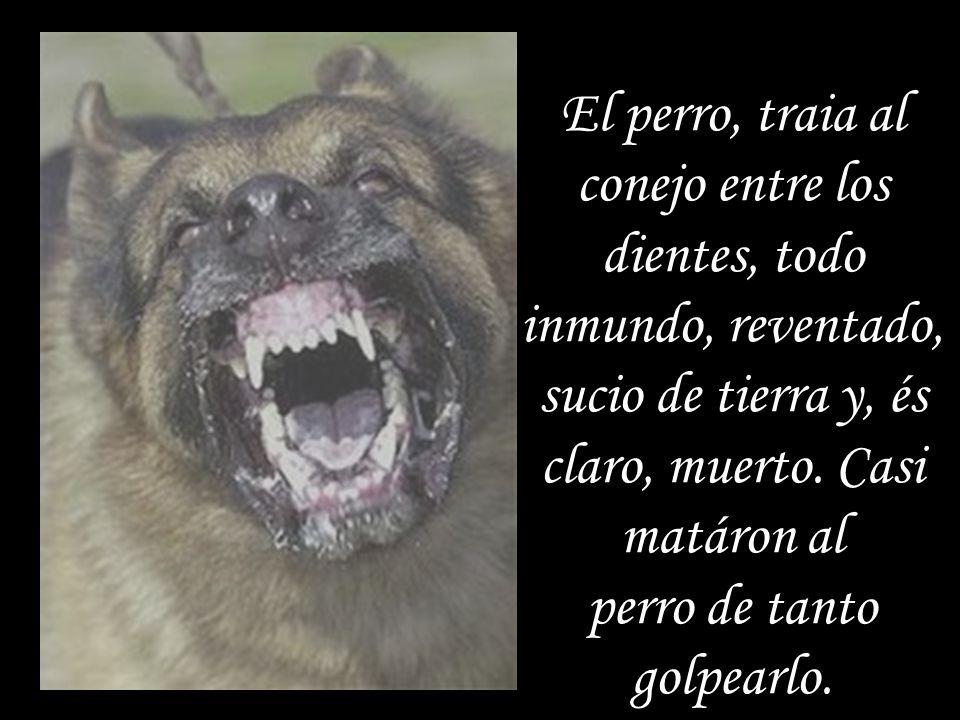 El perro, traia al conejo entre los dientes, todo inmundo, reventado, sucio de tierra y, és claro, muerto.
