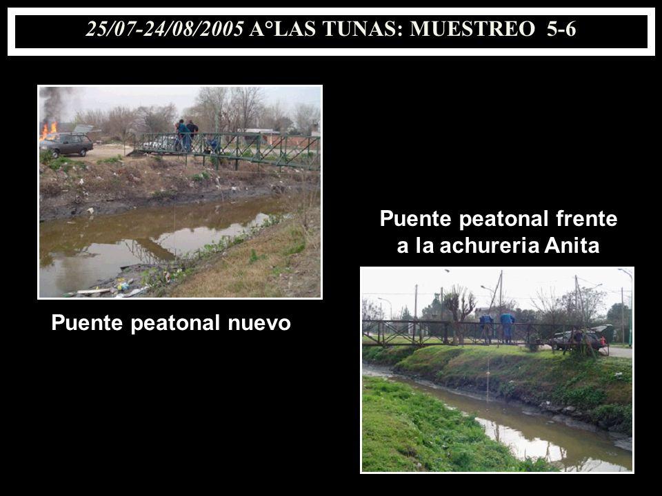 25/07-24/08/2005 A°LAS TUNAS: MUESTREO 5-6 Puente peatonal frente