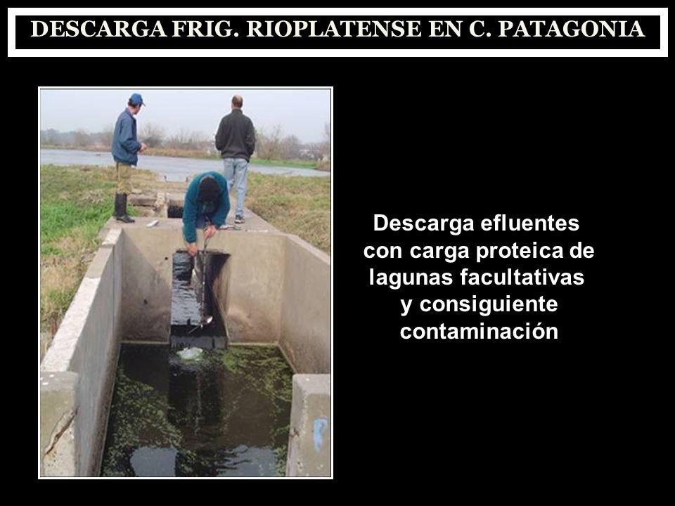 DESCARGA FRIG. RIOPLATENSE EN C. PATAGONIA