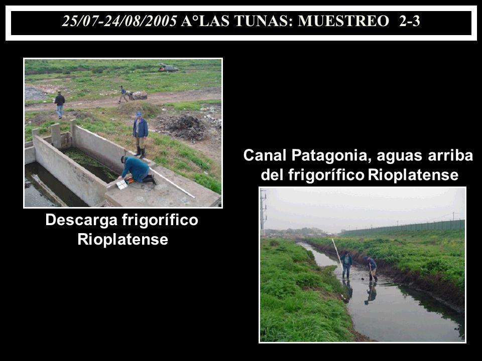 25/07-24/08/2005 A°LAS TUNAS: MUESTREO 2-3