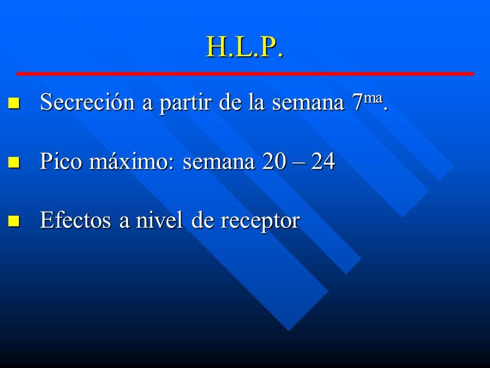 H.L.P. Secreción a partir de la semana 7ma.