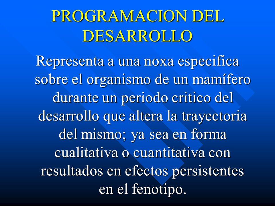 PROGRAMACION DEL DESARROLLO