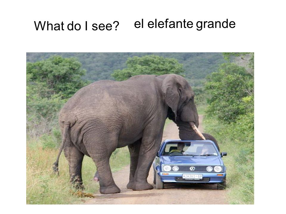 el elefante grande What do I see