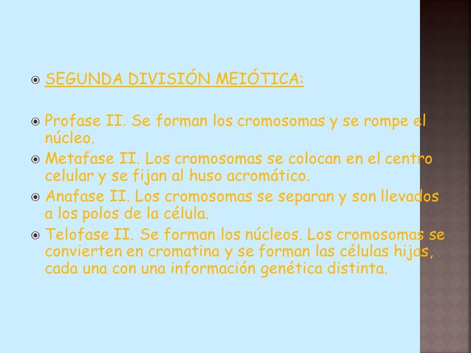 SEGUNDA DIVISIÓN MEIÓTICA: