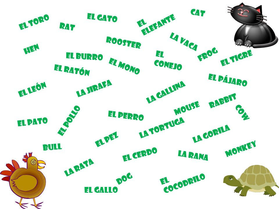El toro cat El elefante El gato rat rooster La vaca hen frog El tigre