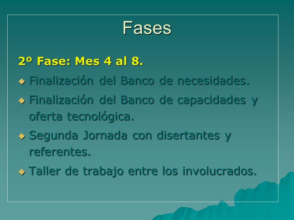 Fases 2º Fase: Mes 4 al 8. Finalización del Banco de necesidades.
