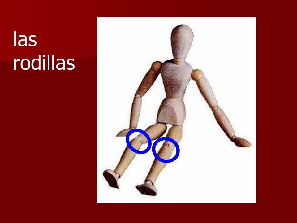 las rodillas