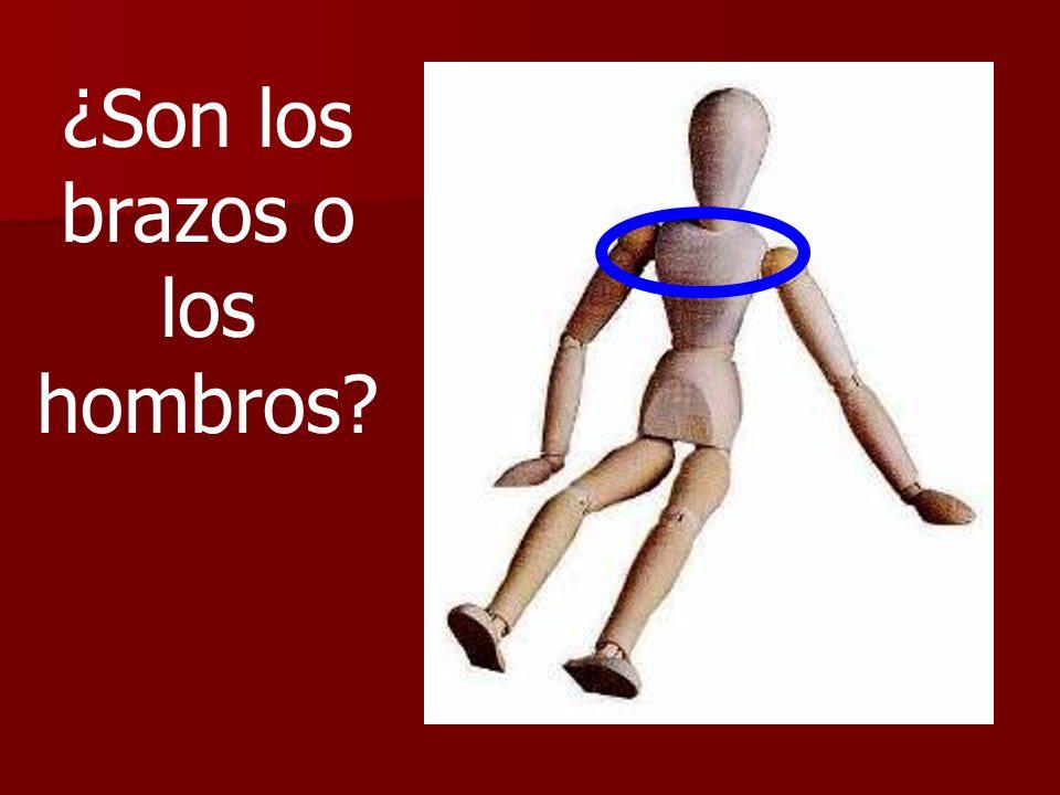 ¿Son los brazos o los hombros