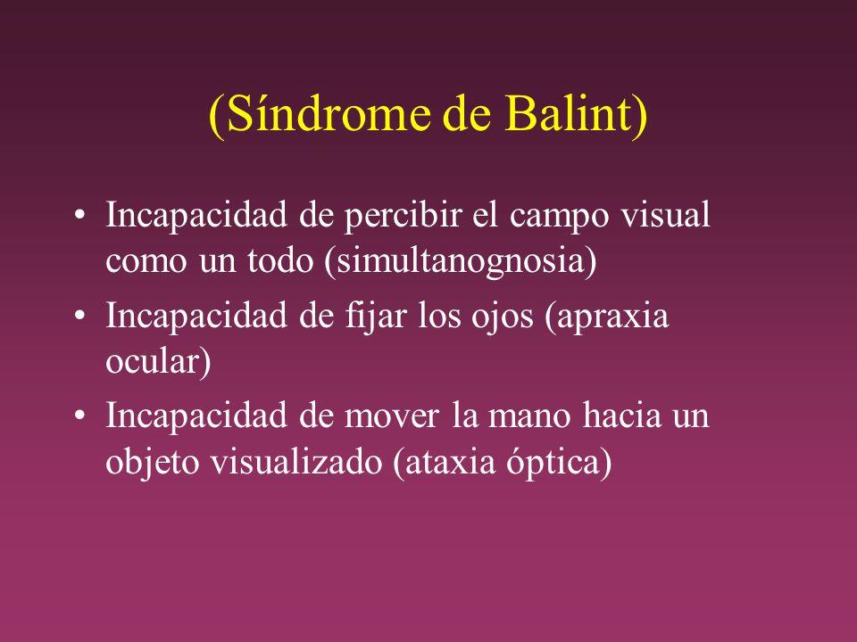 (Síndrome de Balint) Incapacidad de percibir el campo visual como un todo (simultanognosia) Incapacidad de fijar los ojos (apraxia ocular)