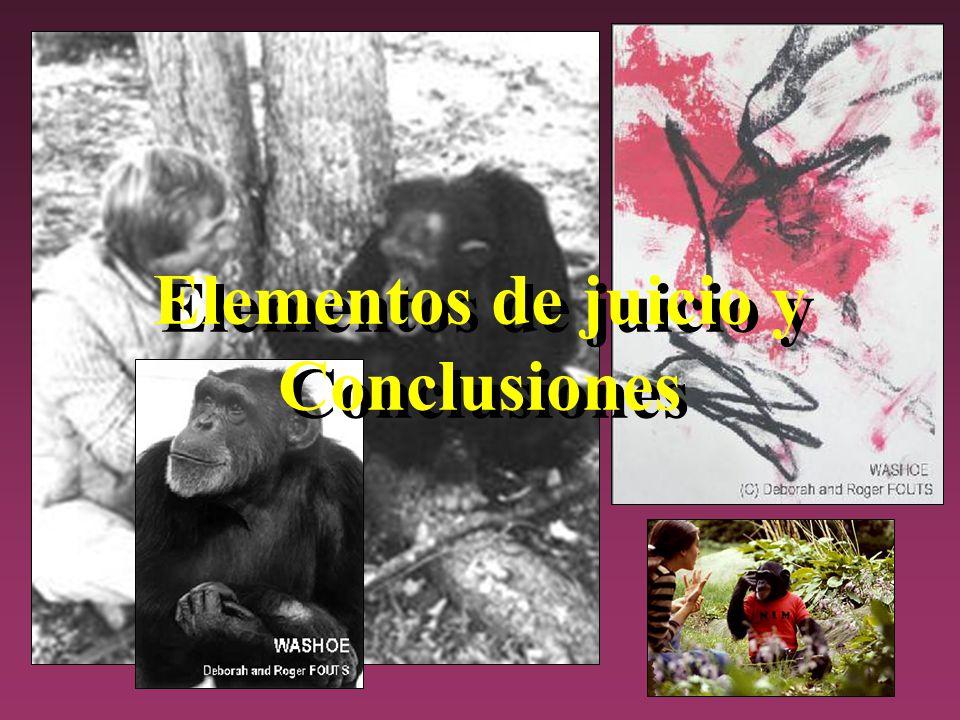 Elementos de juicio y Conclusiones