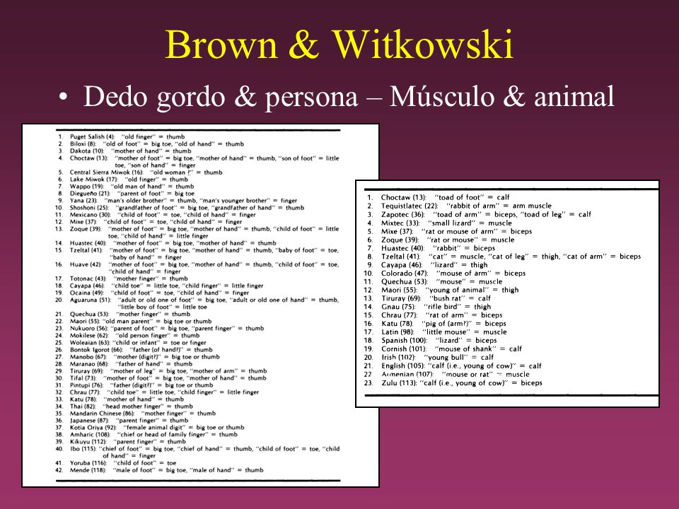 Brown & Witkowski Dedo gordo & persona – Músculo & animal