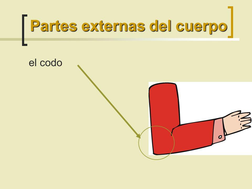 Partes externas del cuerpo