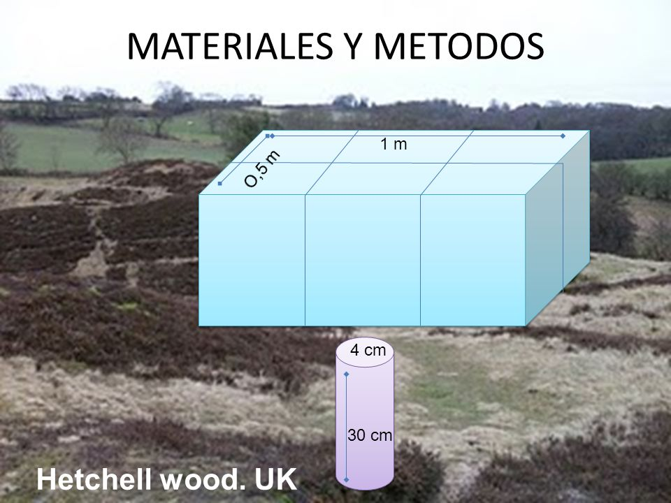 MATERIALES Y METODOS O,5 m 1 m 30 cm 4 cm Hetchell wood. UK