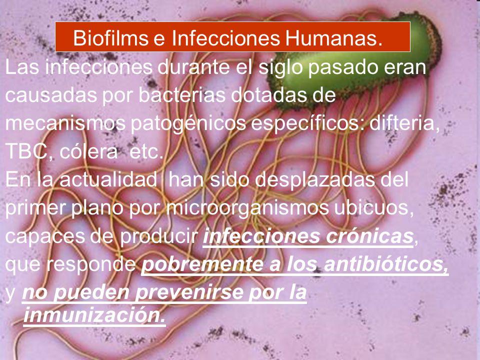 Biofilms e Infecciones Humanas.