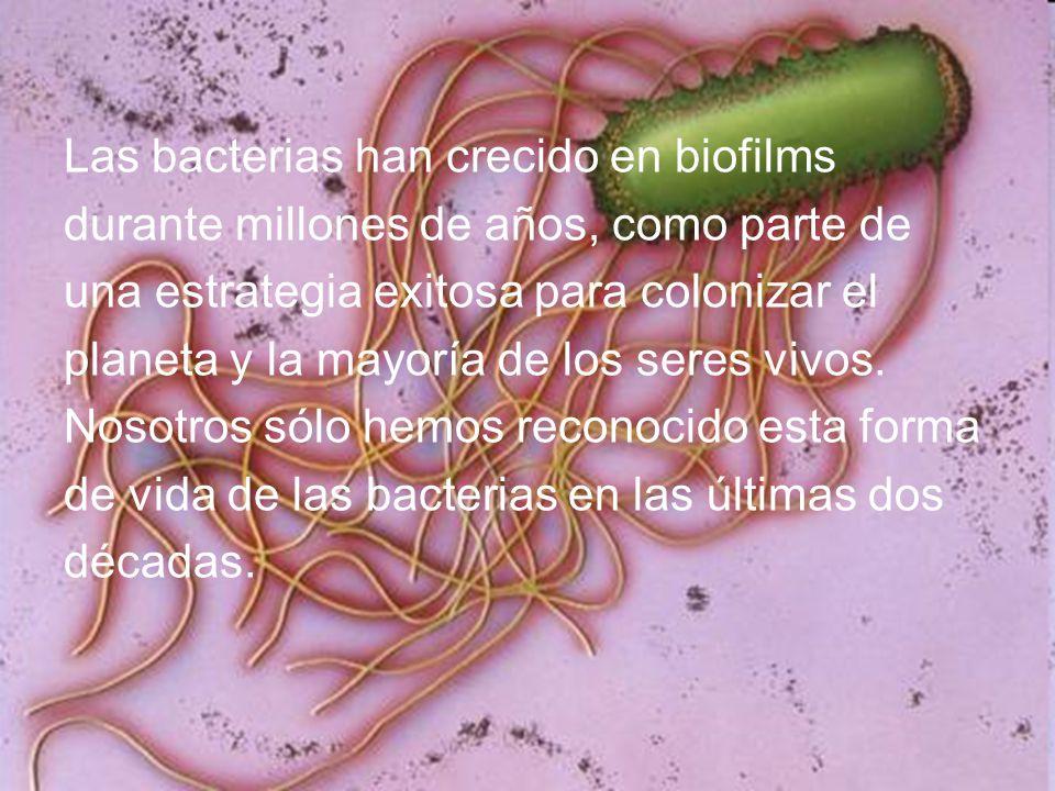 Las bacterias han crecido en biofilms