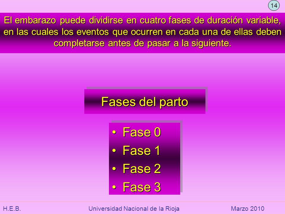 Fases del parto Fase 0 Fase 1 Fase 2 Fase 3
