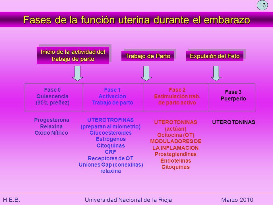 (preparan al miometrio) Uniones Gap (conexinas)