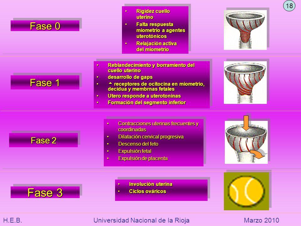 Fase 3 Fase 0 Fase 1 Fase 2 18 Rigidez cuello uterino