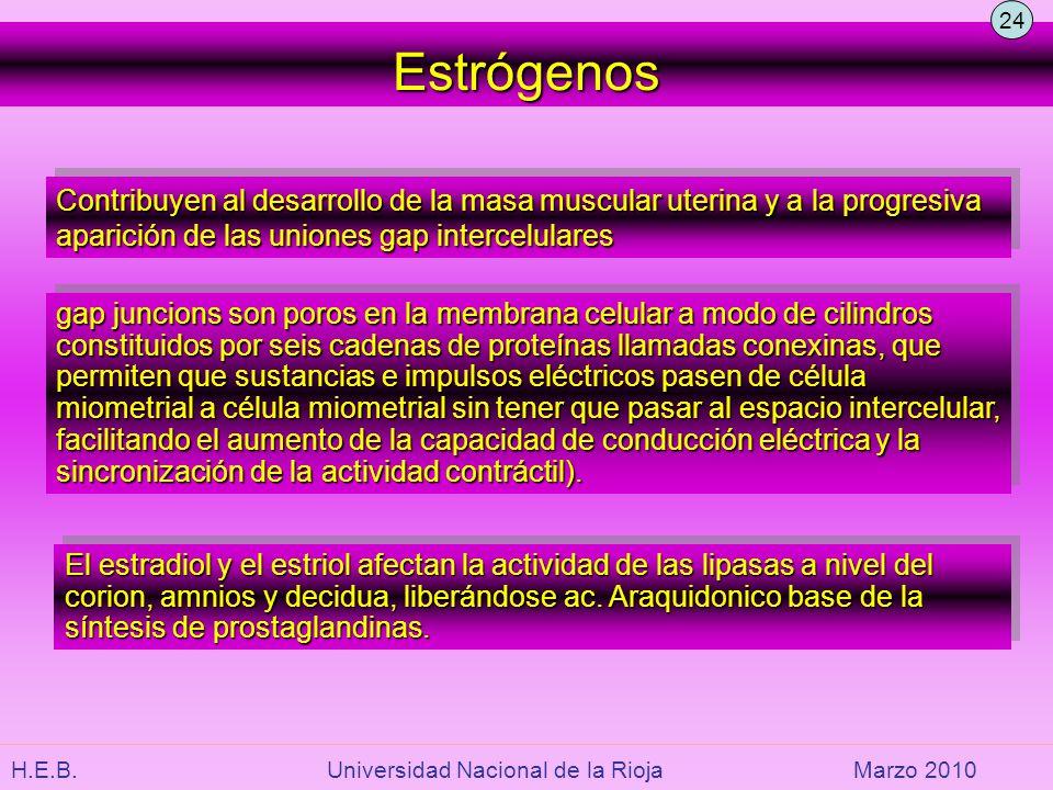 24 Estrógenos. Contribuyen al desarrollo de la masa muscular uterina y a la progresiva aparición de las uniones gap intercelulares.