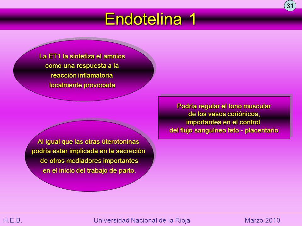 Endotelina 1 31 La ET1 la sintetiza el amnios como una respuesta a la