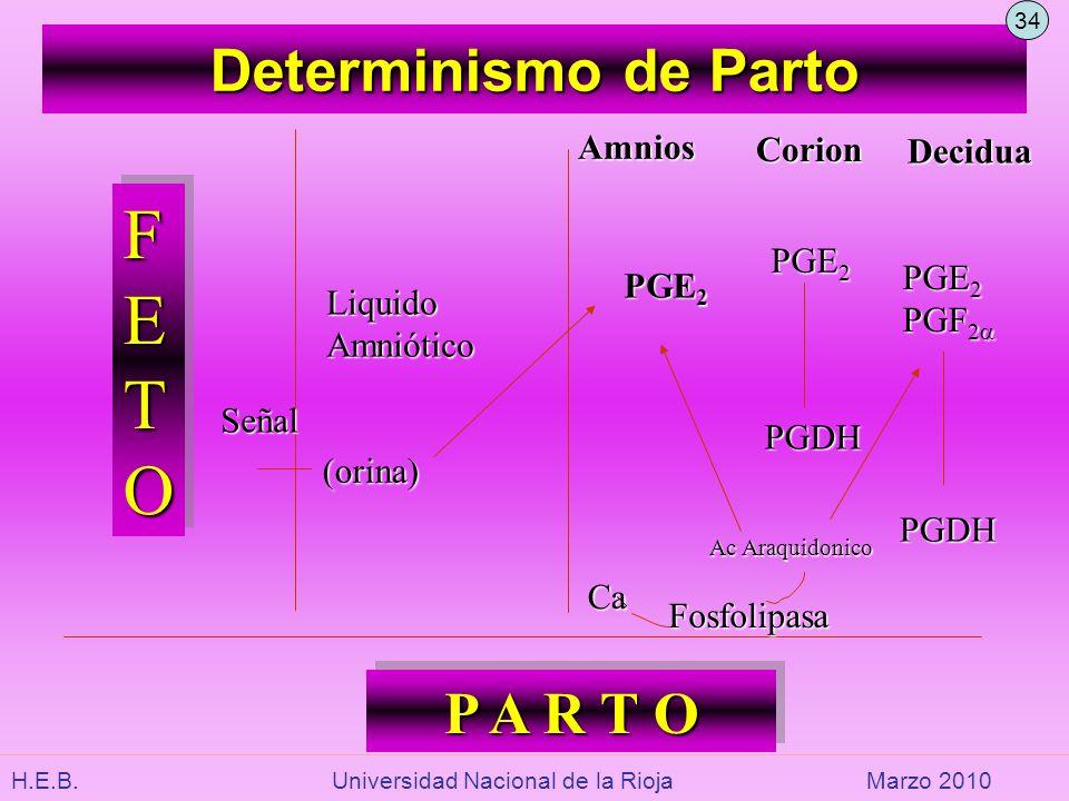 FETO Determinismo de Parto P A R T O Amnios Corion Decidua PGE2 PGE2