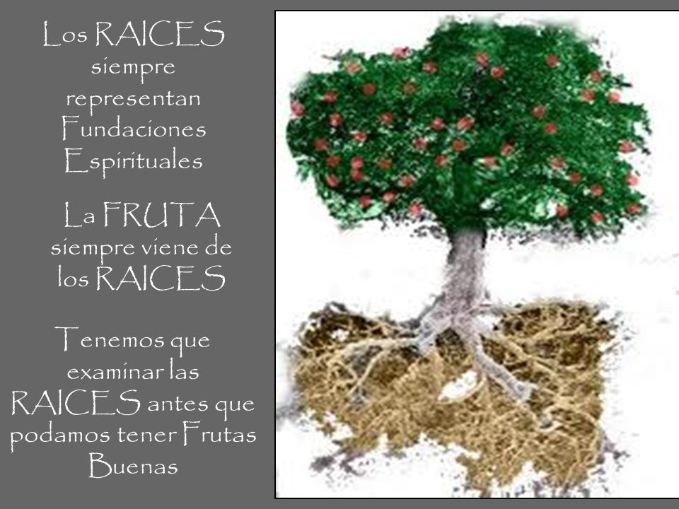 Los RAICES siempre representan Fundaciones Espirituales