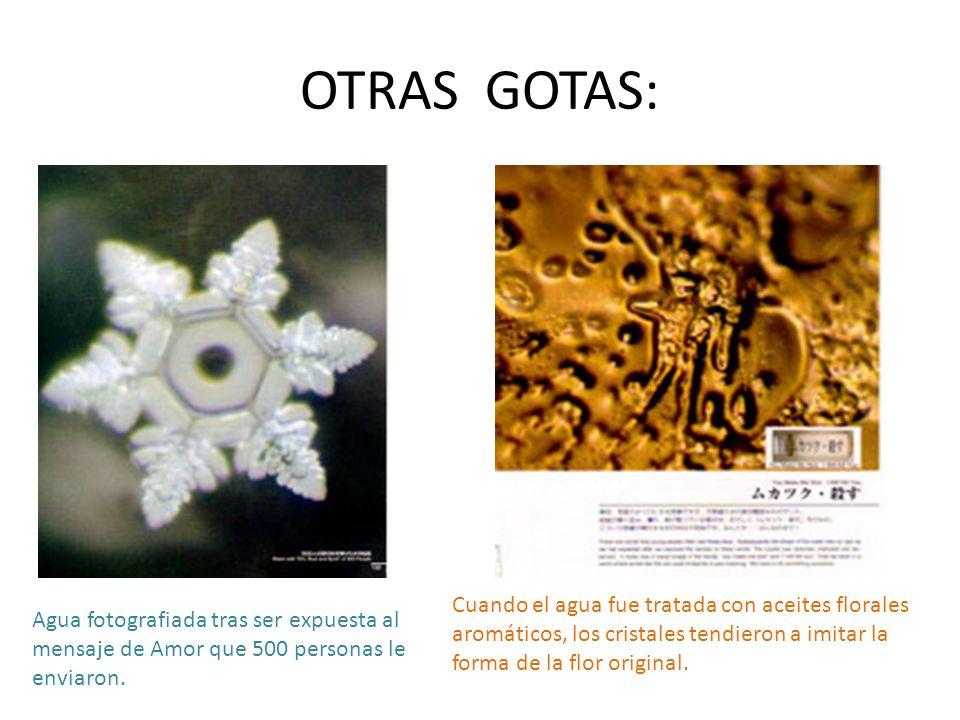 OTRAS GOTAS: Cuando el agua fue tratada con aceites florales aromáticos, los cristales tendieron a imitar la forma de la flor original.