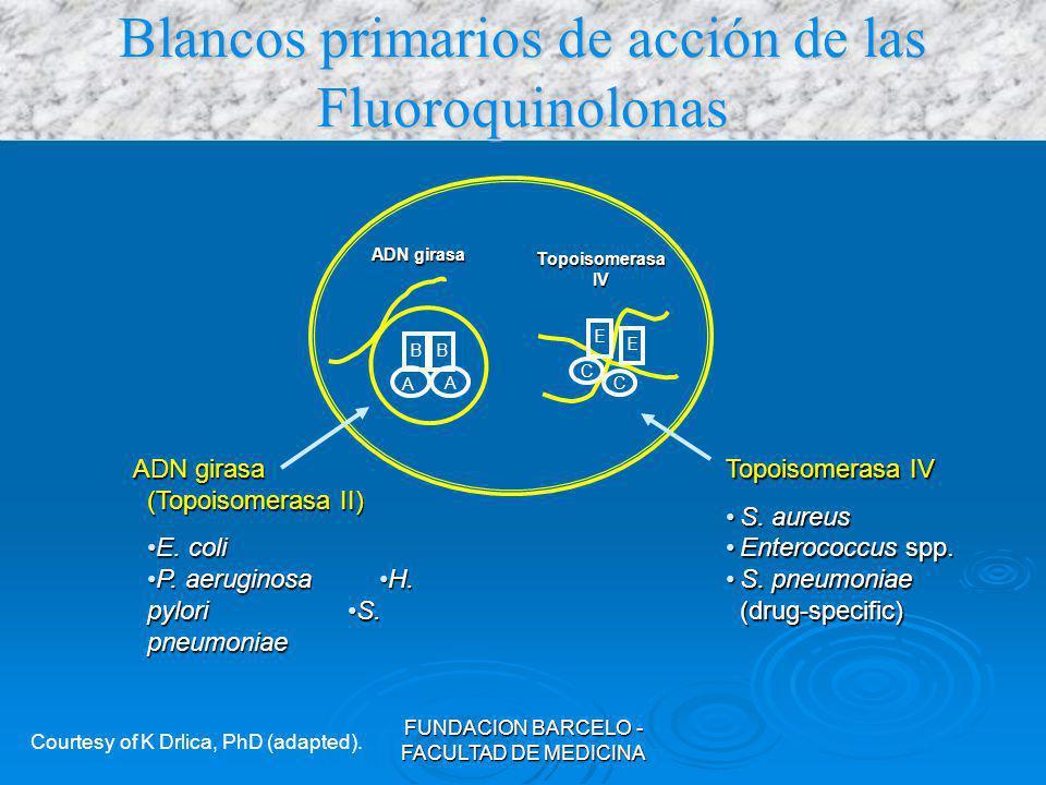 Blancos primarios de acción de las Fluoroquinolonas