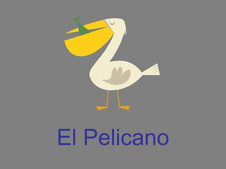 El Pelicano