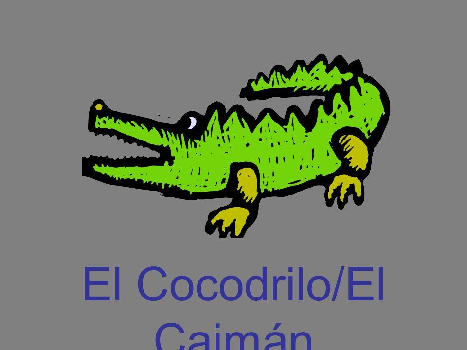 El Cocodrilo/El Caimán