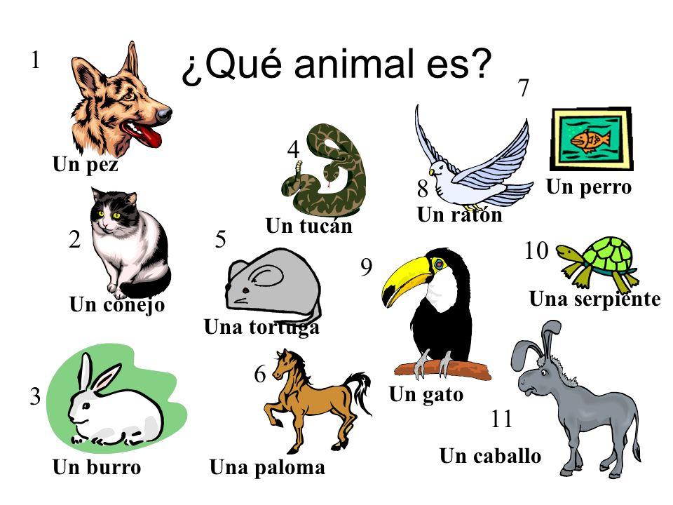 ¿Qué animal es 1 7 4 8 7 2 5 10 9 6 3 11 Un pez Un perro Un ratón