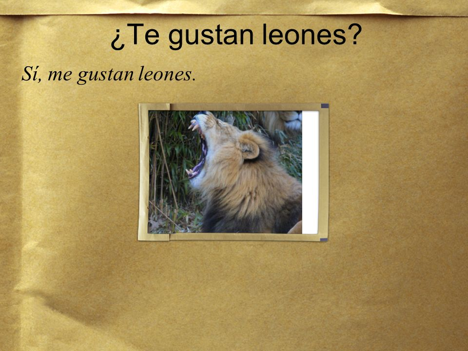 ¿Te gustan leones Sí, me gustan leones.